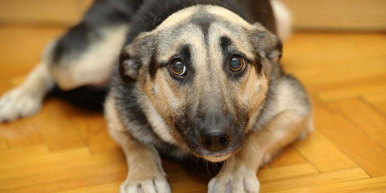 Как помочь собаке справиться со страхом и неуверенностью?