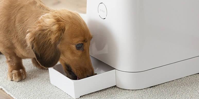 Пять лучших автоматических кормушек для собак
