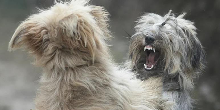 «Сеня, береги руку»: как безопасно разнять дерущихся собак