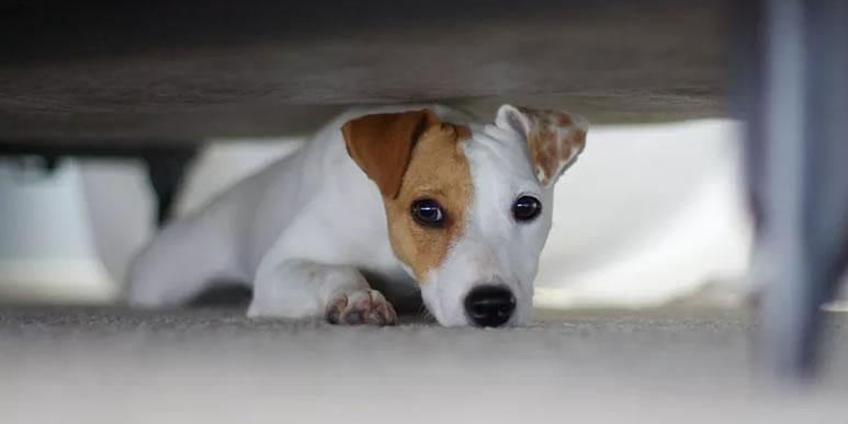Можно ли помочь собаке победить боязнь громких звуков?