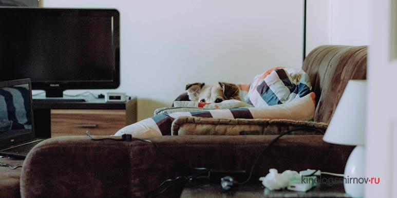 У собаки страх фейерверков? Возможно, все гораздо сложнее, чем кажется