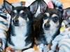Как помочь собаке спокойно пережить ночь фейерверков