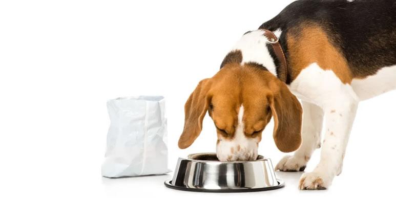 Сколько корма нужно давать маленькому щенку?