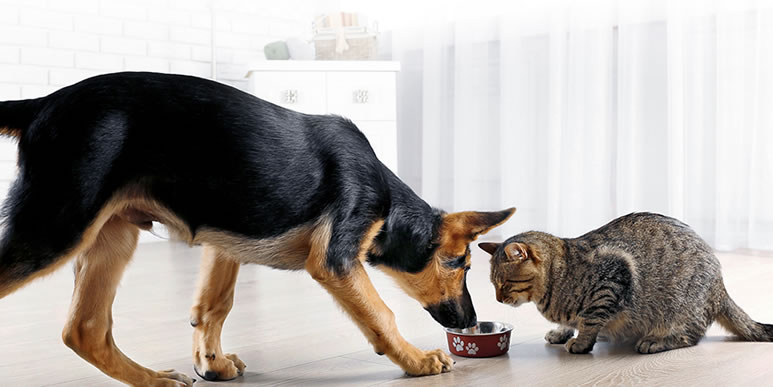 Собаки готовы делиться пищей даже с незнакомцами