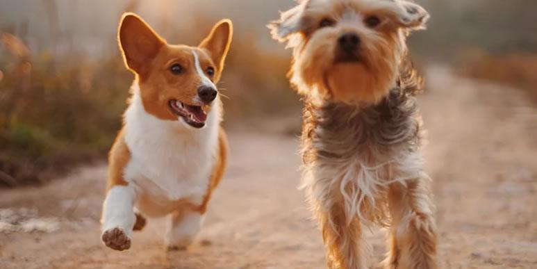 Яблочко от яблоньки: поведение собак на 70% определяется генетикой
