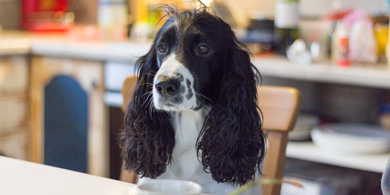 Чем можно угостить собаку со стола без вреда для здоровья?
