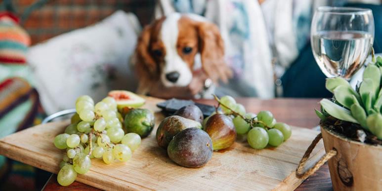 Что человеку хорошо, то собаке смерть: опасные продукты с нашего стола