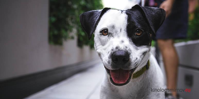 Особенности характера собаки можно узнать по форме ее головы и размеру тела