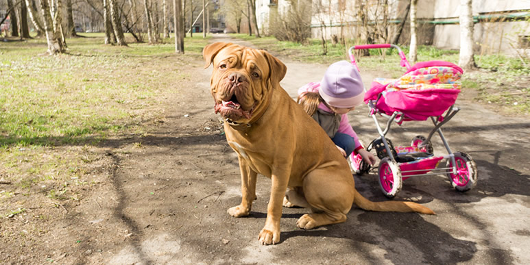 Присутствие собаки в доме укрепляет иммунитет ребенка