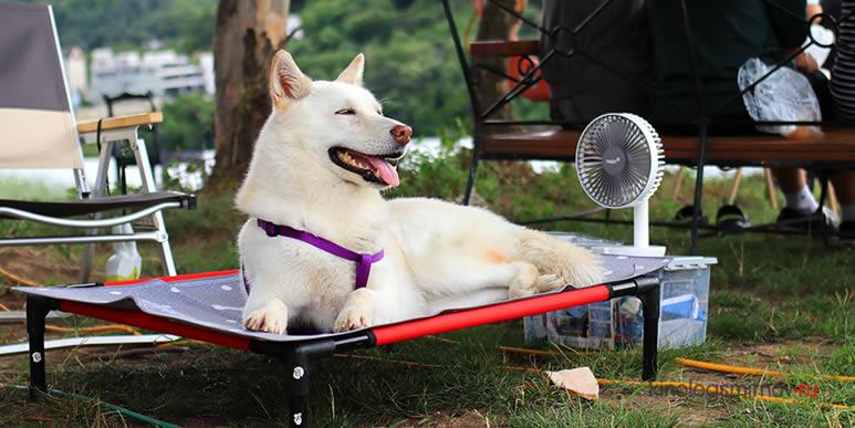 Если на улице жарко, а ваша собака ведет себя не так, как обычно, немедленно обратитесь к ветеринару