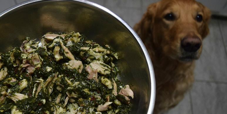Еда из отходов лучше сухого корма для собак? Позвольте не согласиться.