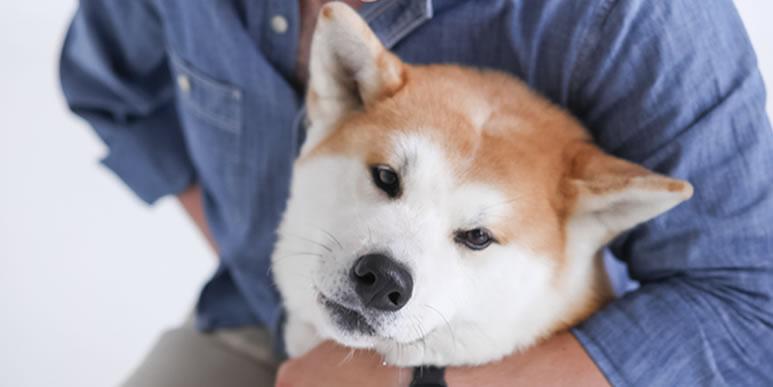 Почему попытка обнять собаку может привести к конфликту?