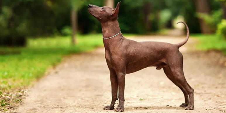 18 пород собак, которые редко вызывают аллергию