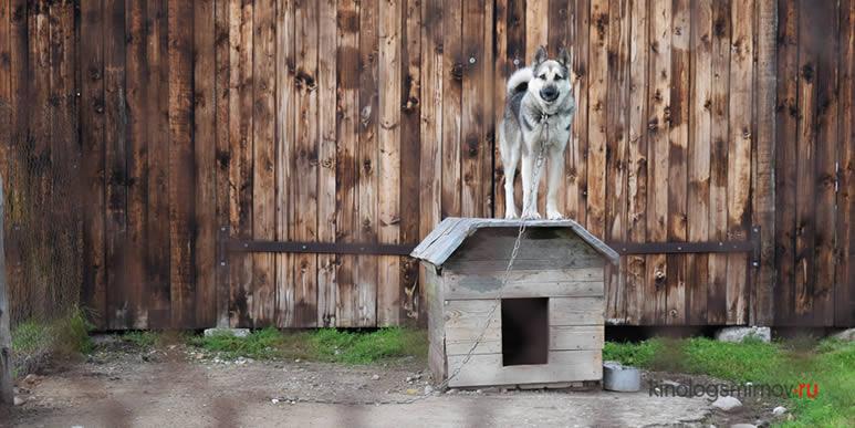 30 пород собак, внесённых страховыми компаниями в «чёрный список»