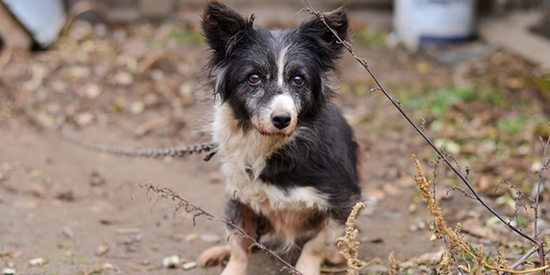 «Жила-была собака»: старая сказка на новый лад