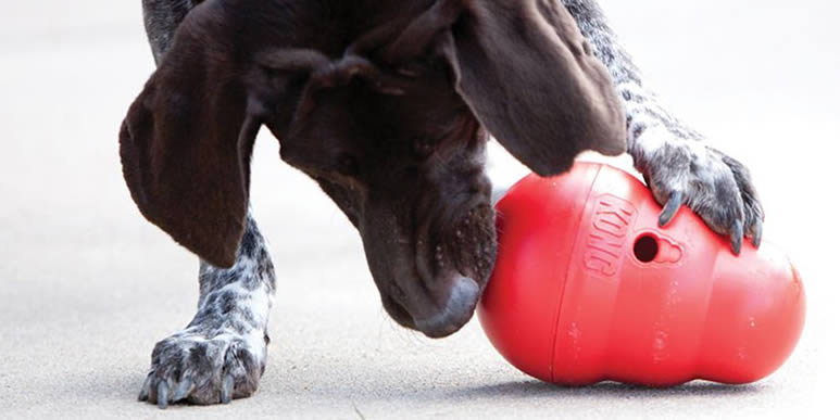 Интерактивные игрушки Kong: чудес не будет, но удовольствие собака получит