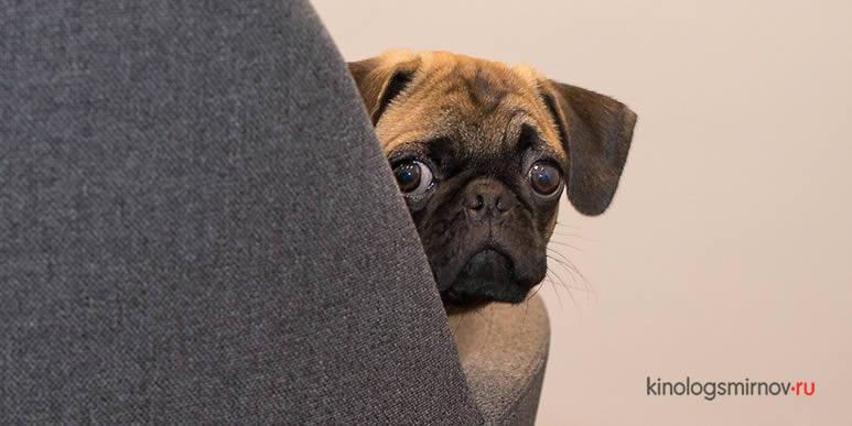 Опасное развлечение: лазерные указки сводят собак с ума