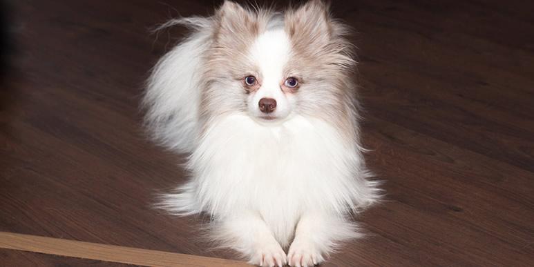 Почему собака лижет человеку лицо и можно ли ее от этого отучить?