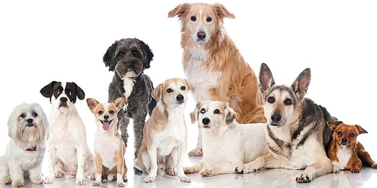 Статистика средней продолжительности жизни 160 пород собак