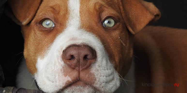 На что смотрит собака, когда смотрит на человека?