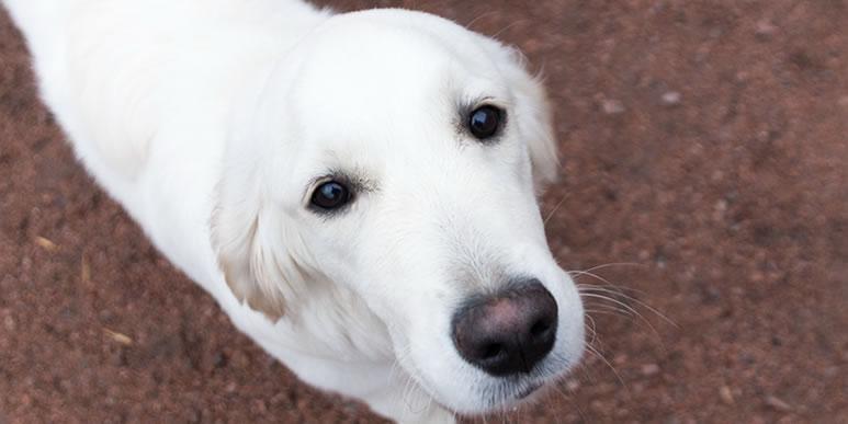 Обнимашки, мокрый нос и окситоцин. Как собаки демонстрируют человеку свою любовь и преданность.