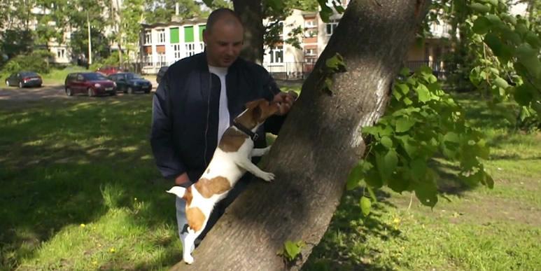 Видео: джек рассел терьер Майло учится лазать по деревьям