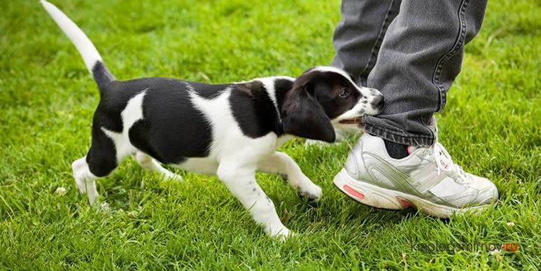 Три запрета, над которыми нужно серьезно поработать при воспитании щенка