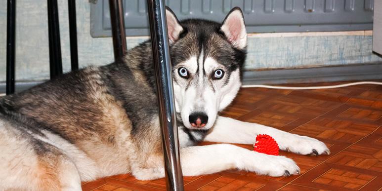 Что делать, если после нападения собаки кобель начал проявлять агрессию?