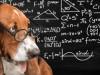 Ученые установили, что собаки считают в уме так же, как люди