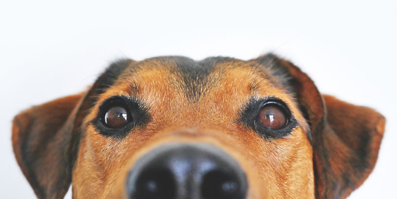 Психика собаки не намного проще, чем человеческая