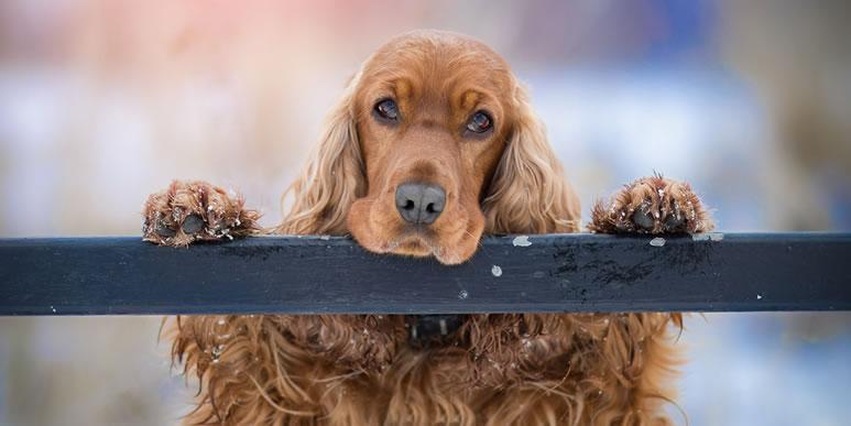 Поощрение или принуждение: как методы дрессировки влияют на привязанность собаки к человеку