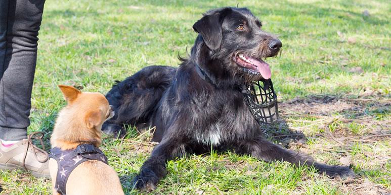 Вы слышали, что дворняги гораздо умнее и преданнее породистых собак?