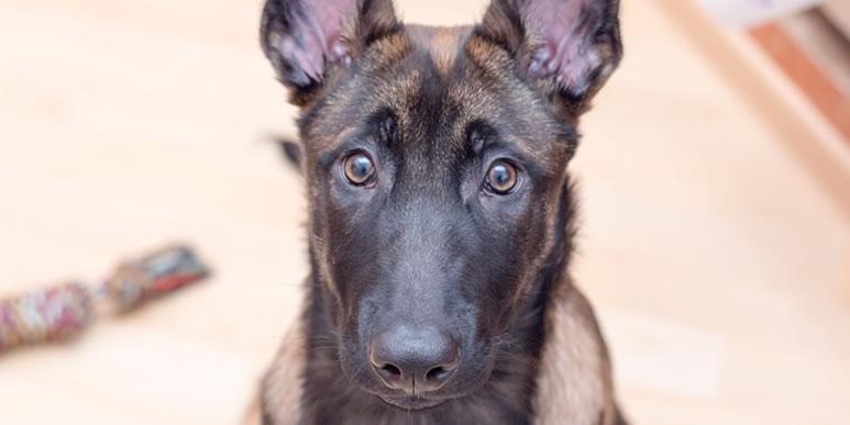 Нужно ли указывать собакам на ошибки при выполнении заданий?