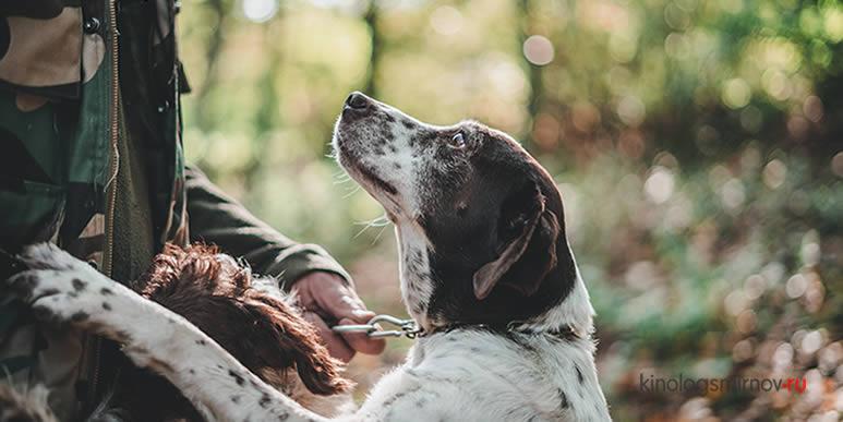 Коррекция поведения собаки: почему у одних владельцев получается лучше, чем у других?