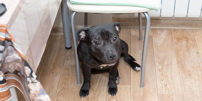 Можно ли угощать собаку кусочками со стола?