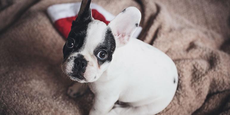 Лучшее, что вы можете подарить своей собаке на Новый год