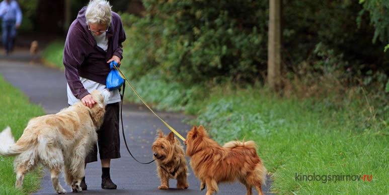 Не дарите бабушкам котят: собаки дают пожилым людям гораздо больше