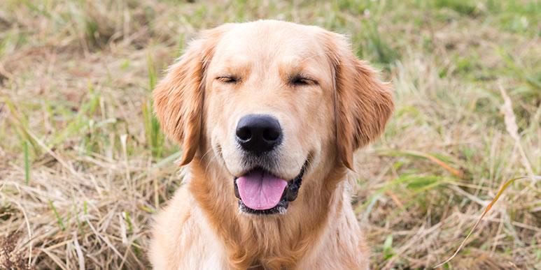 Собака не понимает нашу речь, но способна читать мысли