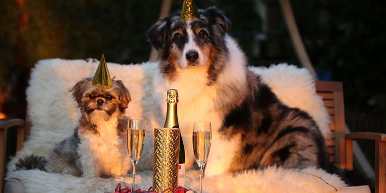 Собака за праздничным столом: можно и нельзя