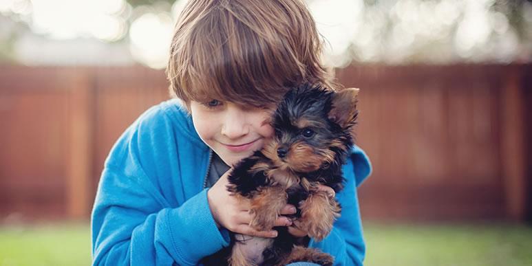 Как избежать конфликтов между собакой и ребенком?