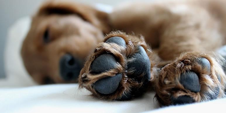 Как защитить зимой лапы собаки от соли и реагентов?