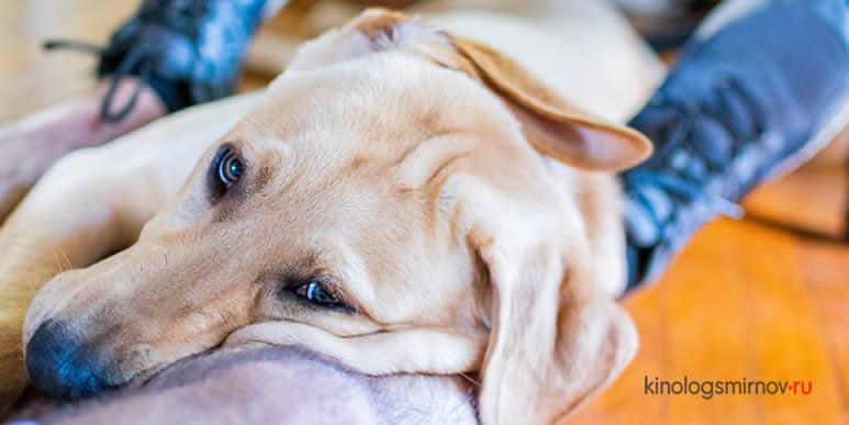 Почему собака метит дома?