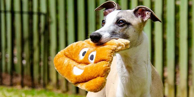 Почему собаки едят экскременты?