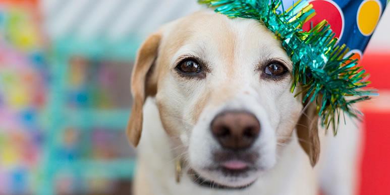 Пушистый подарок: правда ли, что дарить собаку- плохая идея?