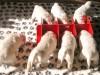 Заводчику на заметку: как предотвратить пищевую агрессию у щенков?