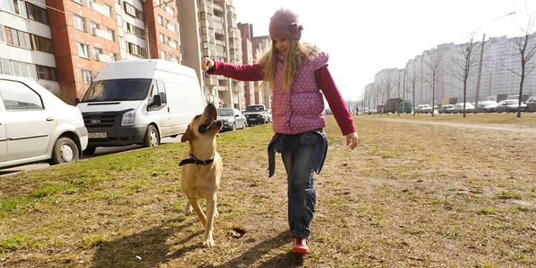 Как отучить собаку тянуть поводок на прогулке?