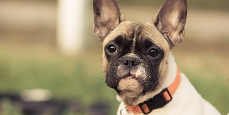 Пять самых классных ошейников для маленьких щенков