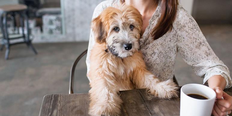 Дома тоже хорошо: чему можно научить собаку, не выходя на улицу?