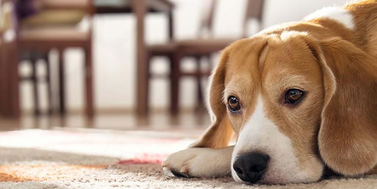 Повлияет ли стерилизация или кастрация на отношения с другими собаками?