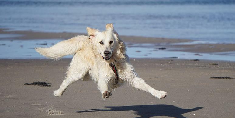 «Это у вас лабрадор или ретривер»: задачка про собак с шестью неизвестными